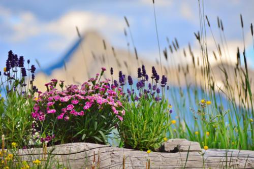 Venedigergruppe mit Blumen