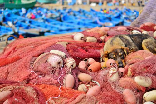 Hund in Fischernetz, Essaouira Marokko
